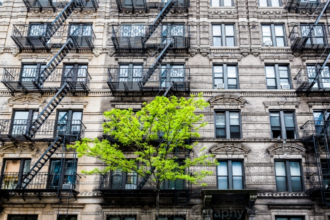 New York 0515 Blog-4