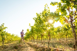 vineyard-blog-11
