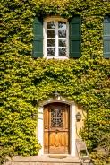 vineyard-blog-2