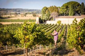 vineyard-blog-7